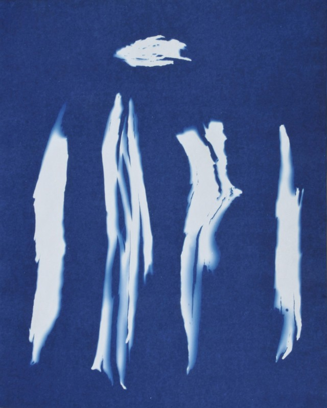 Elin O'Hara Slavick Bark from an A-bombed Eucalyptus Tree, 2008 Cyanotype